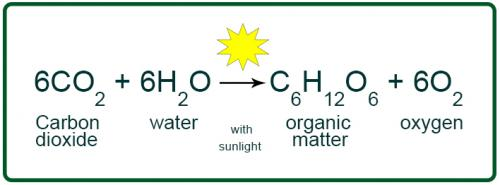 write the chemical equation of photosynthesis