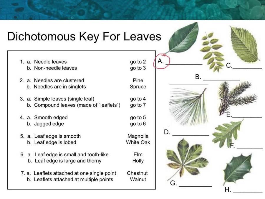 Dichotomous Keys and Classification Quiz Questions – Dichotomous Key Worksheets