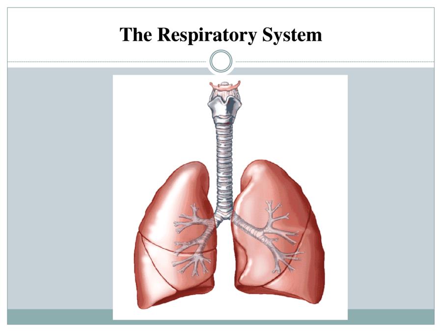 quizizz question set respiratory system