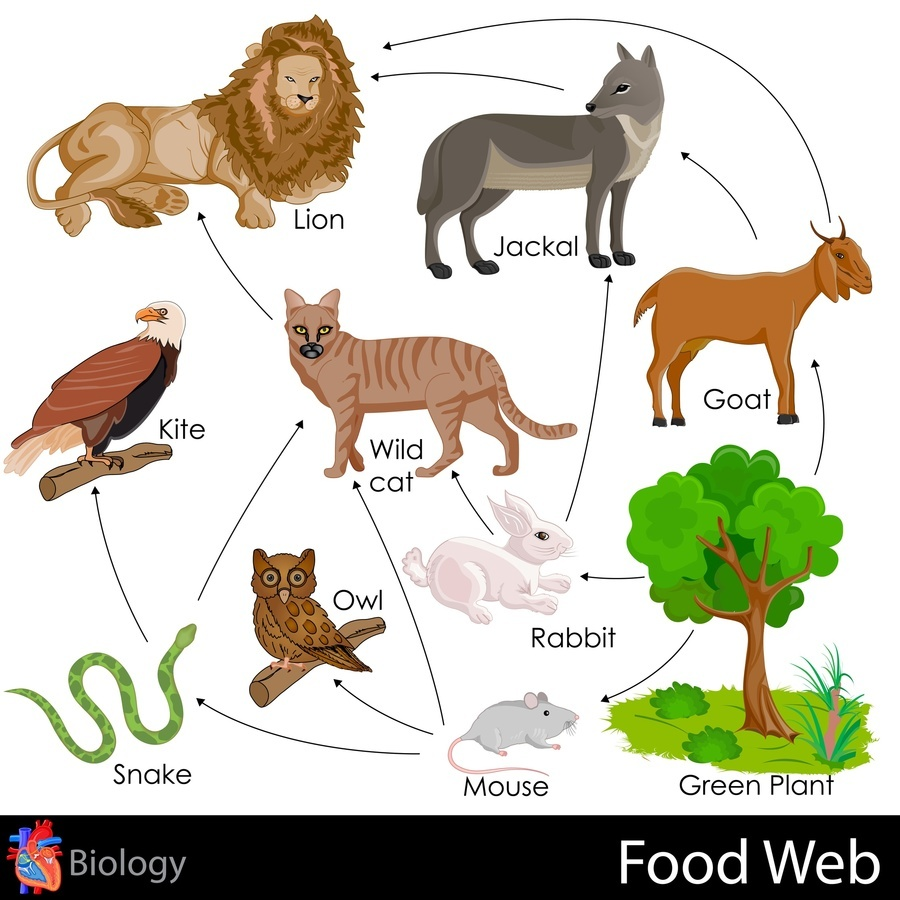 What is a consumer in biology?