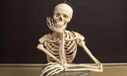 science 7th grade: skeletal, integumentary, muscular system - quiz, Skeleton
