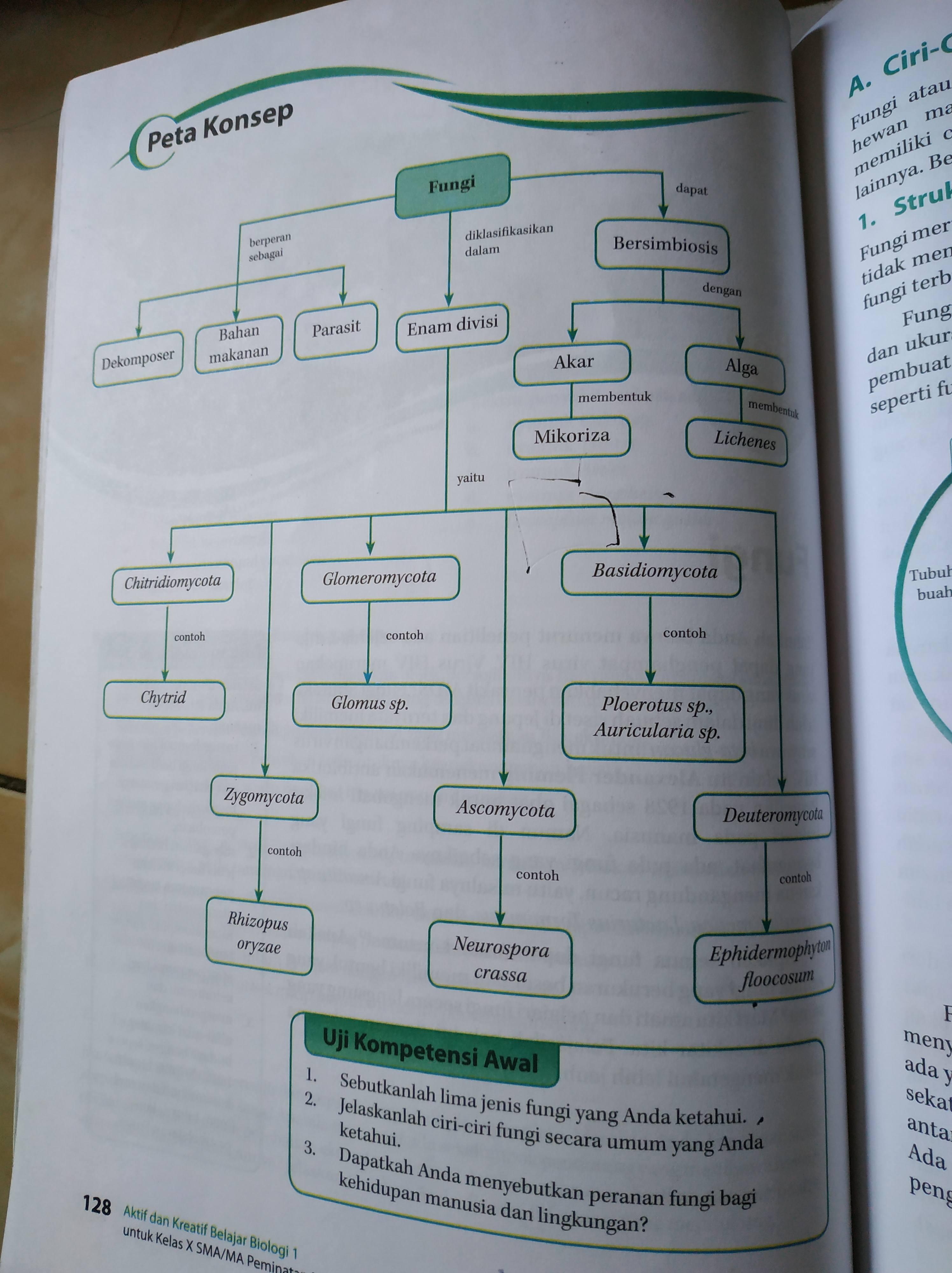 Pernyataan Tentang Kromosom Dna Dan Inti Sel Yang Benar ...