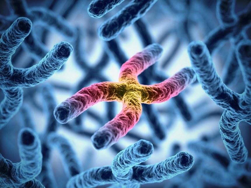 Genetic Disorders | Genetics Quiz - Quizizz