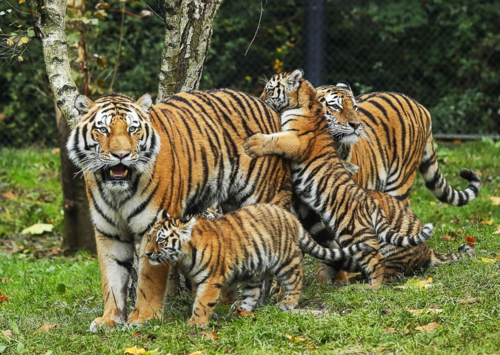 Interaksi Antara Haiwan Biology Quiz Quizizz