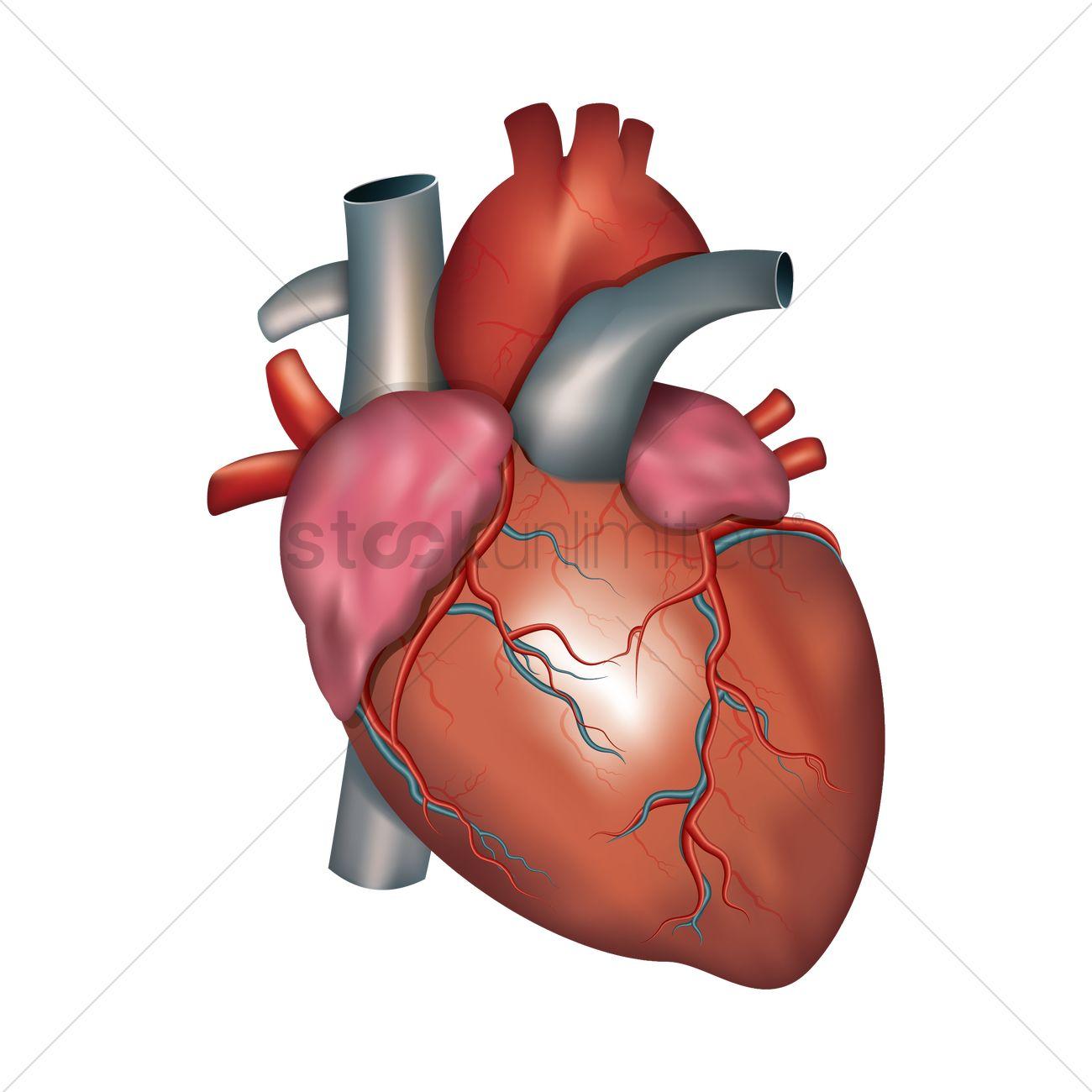 Circulatory System Grade 8 | Biology Quiz - Quizizz