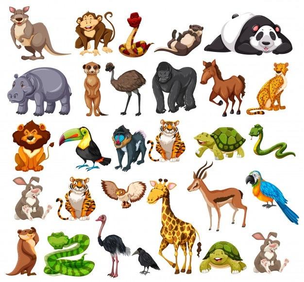 Klasifikasi Makhluk Hidup   Biology Quiz   Quizizz