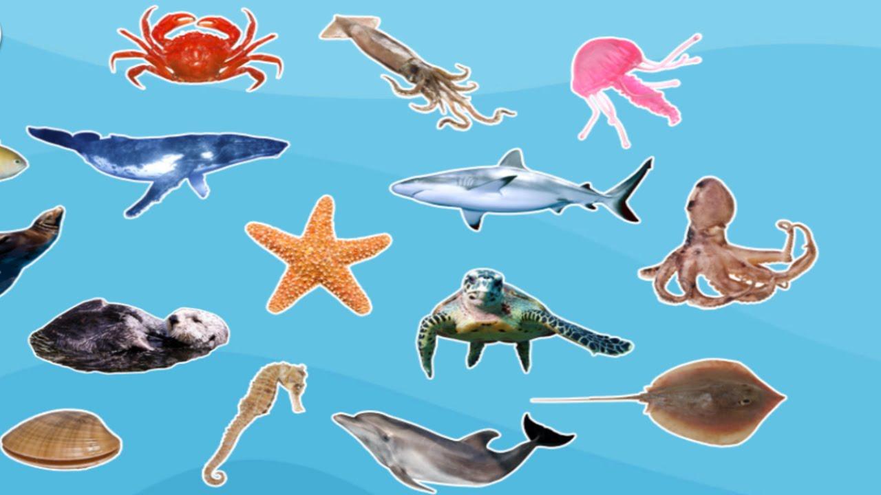 Sea Animals Ecology Quiz Quizizz