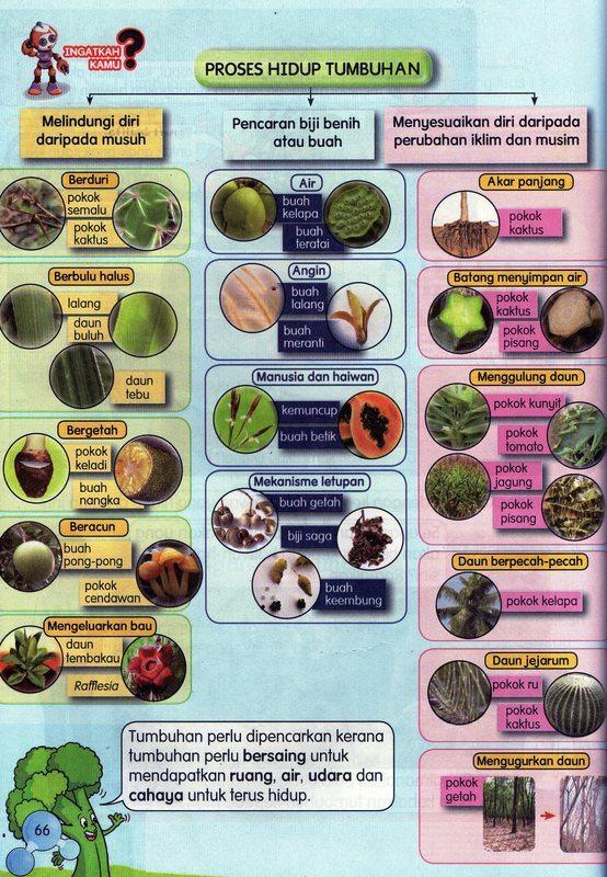 Proses Hidup Tumbuhan Sains Tahun 5 Quiz Quizizz