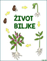 Biljke cvjetnjače