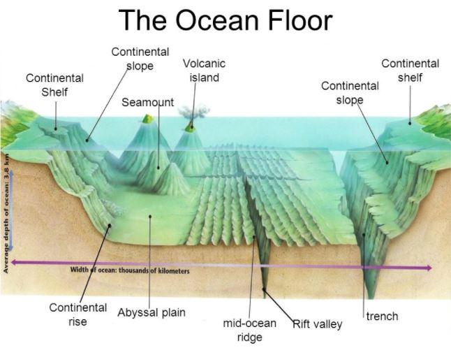Ocean Floor Features | Science Quiz - Quizizz