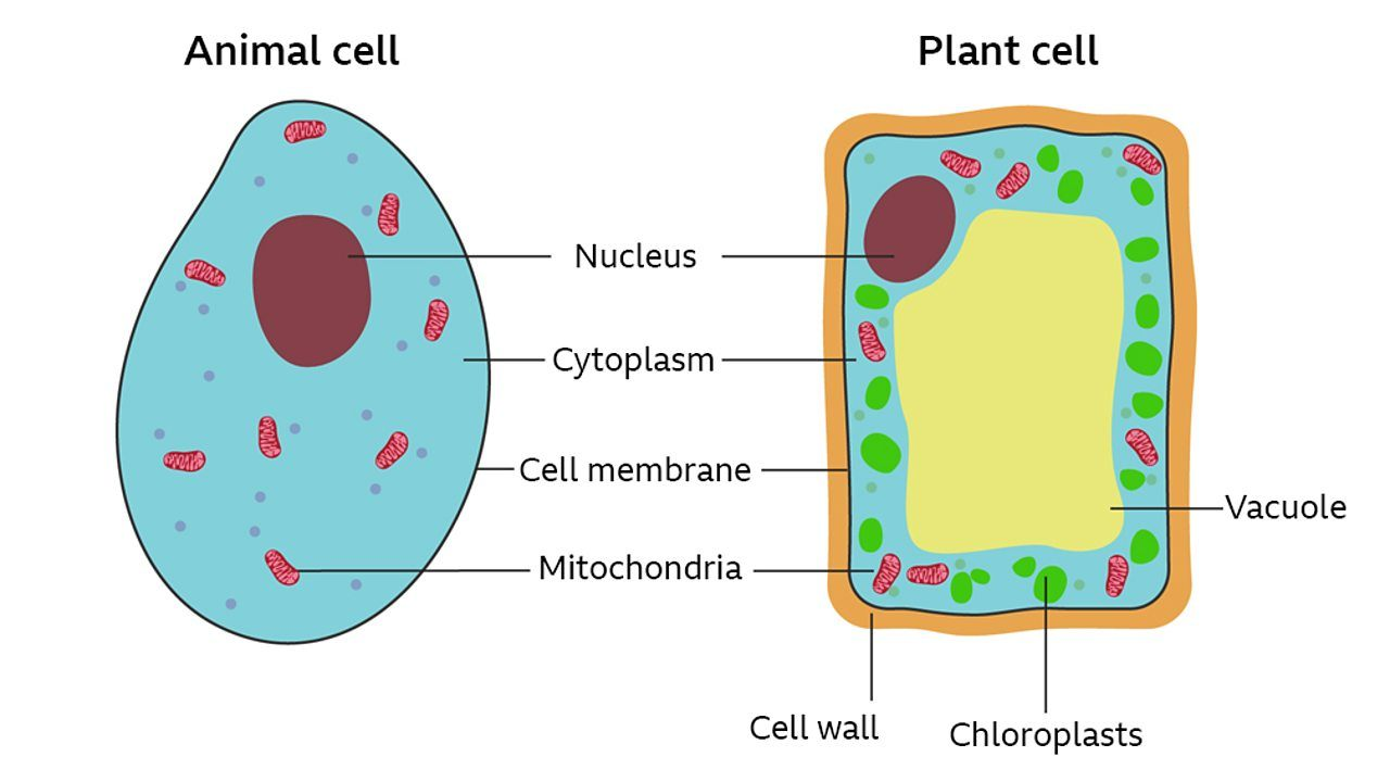 Specialised cells | Cell Structure Quiz - Quizizz