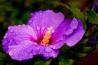 The Purple Hibiscus Pages 1 26 Literature Quiz Quizizz