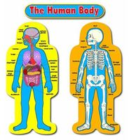 Human Body: Basic Functions | Human Anatomy Quiz - Quizizz