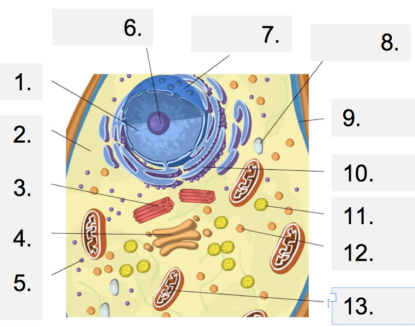 Cell Structure Gizmo Animal Cell Functions Part 2 Quiz ...