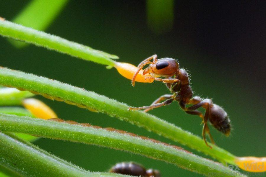 Symbiotic Relationships | Ecology Quiz - Quizizz