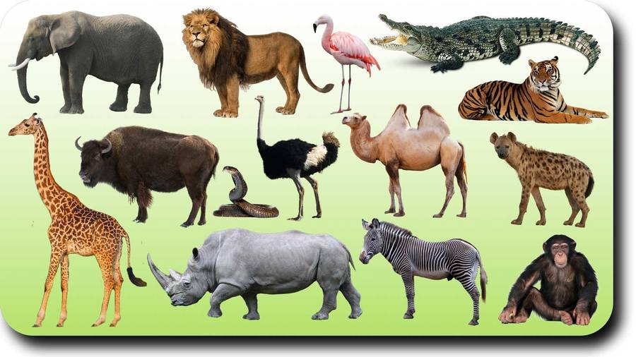 ANIMALS QUIZ 2nd Grade | Vocabulary Quiz - Quizizz