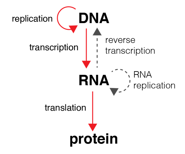 CHAPTER 8: From DNA to Proteins | Other Quiz - Quizizz