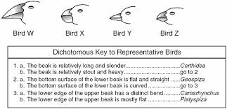 7.11A Dichotomous Keys | Genetics Quiz - Quizizz