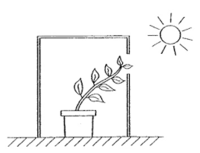 Sains Tahun 4 Unit 5 Proses Hidup Tumbuhan Quiz Quizizz